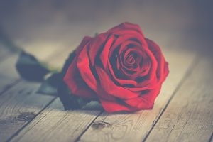 kuva_onnittelu_ruusu