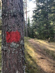kuva_pahkinapolun_merkki_puussa