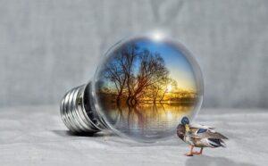 kuva_kuvituskuva_luonnonsuojelu
